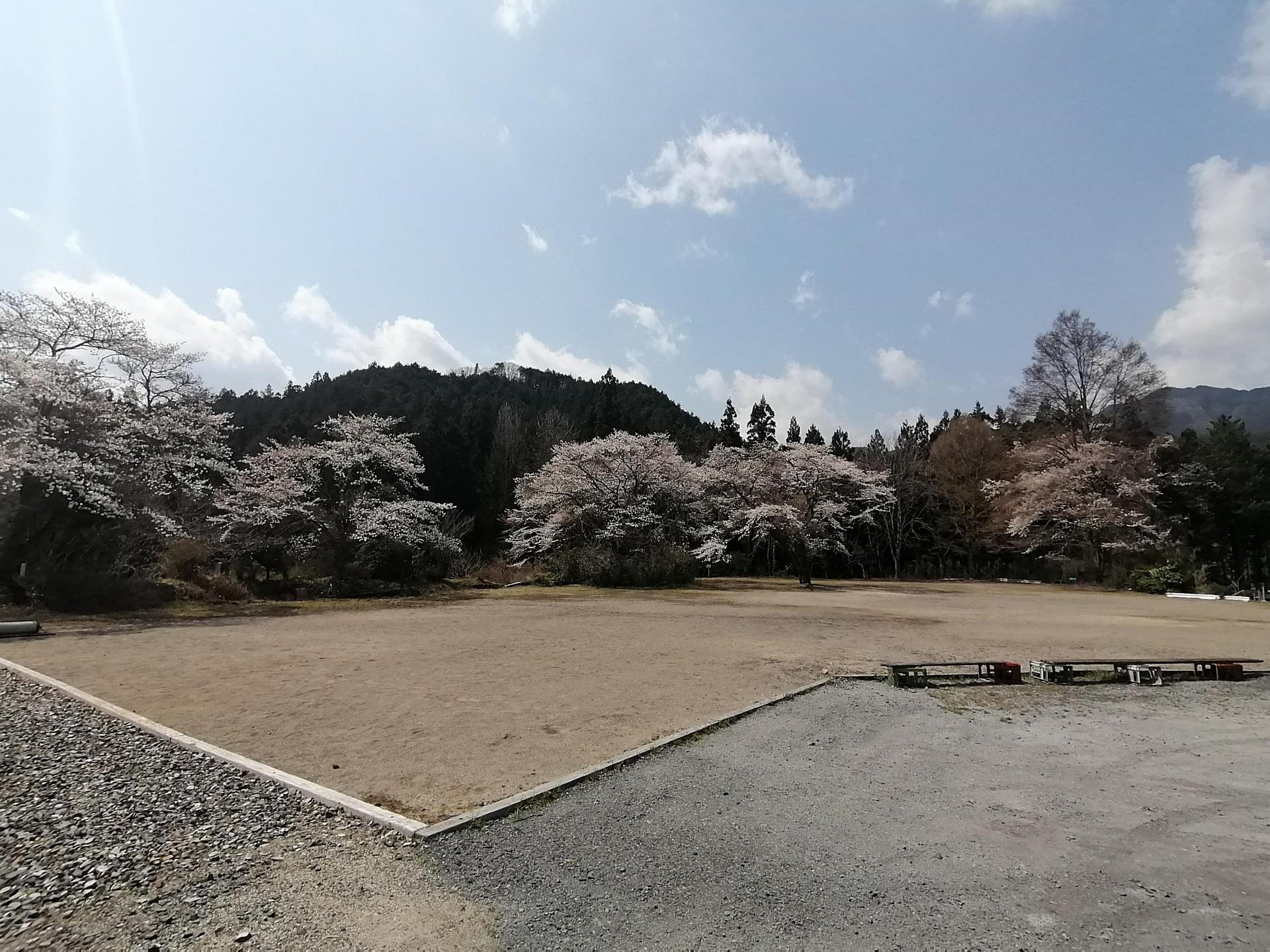 小来川駐在所横広場の桜
